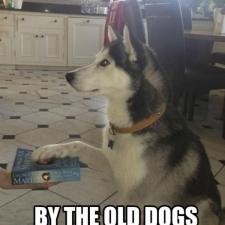 Dog-Swears-It