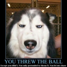 ball+meme