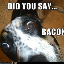 funny-dog-pictures-i-has-a-hotdog-i-know-that-word