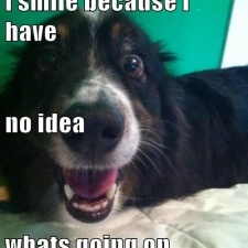 funny-dog-pictures-i-smile-because-i-have-no-idea-whats-going-on
