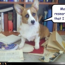 funny-dog-pictures-months-of-research-indicate-that-i-cant-read