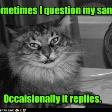 funny-pictures-lolcats-sometimes-i-question-my-sanity