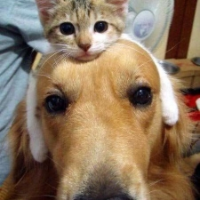 imagesthinking-cat