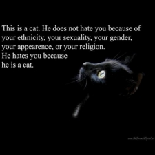 imageswhy-the-cat-hates-you_small